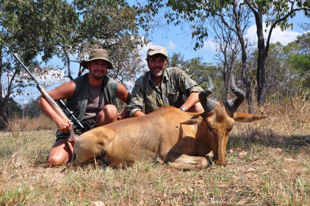 <font color=orange>Lichtenstein's Hartebeest</font> Lichtenstein's Hartebeest  Trophy hunting photos african plains game  hunting pictures plains game