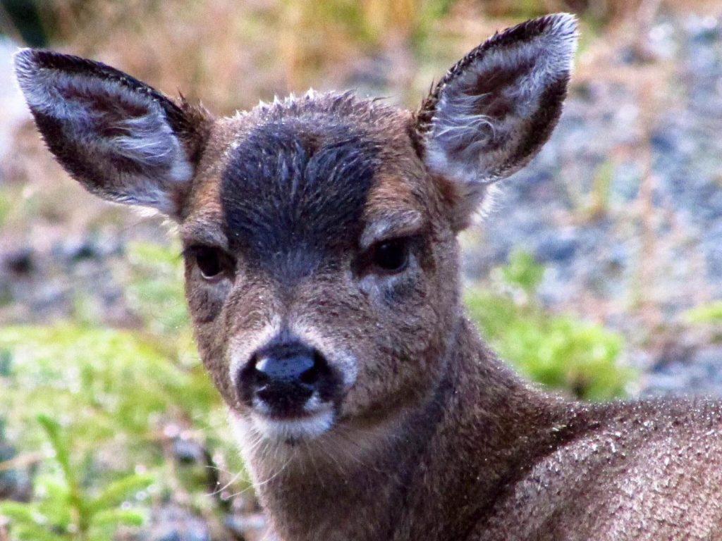 <font color=orange>POW, AK</font> POW, AK  Alaska hunting photos   Alaska hunting pictures