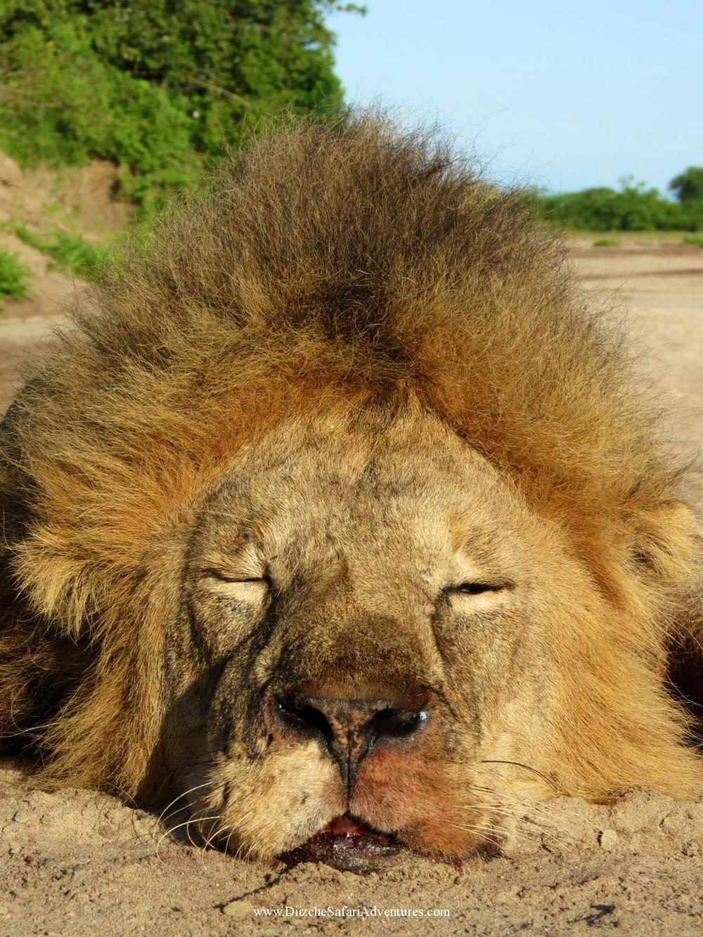 <font color=orange>TZ</font> TZ  Trophy hunting photos african dangerous game  hunting pictures dangerous game