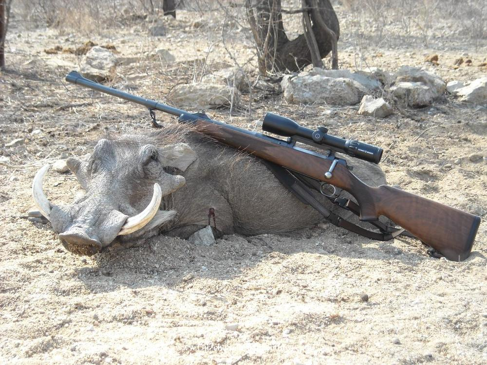 <font color=orange>Warthog-Namibia</font> Warthog-Namibia  Trophy hunting photos african plains game  hunting pictures plains game