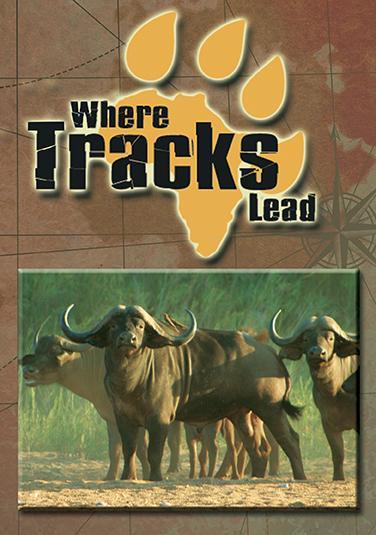 Where Tracks Lead  Where Tracks Lead DVD  Safari Classics Productions