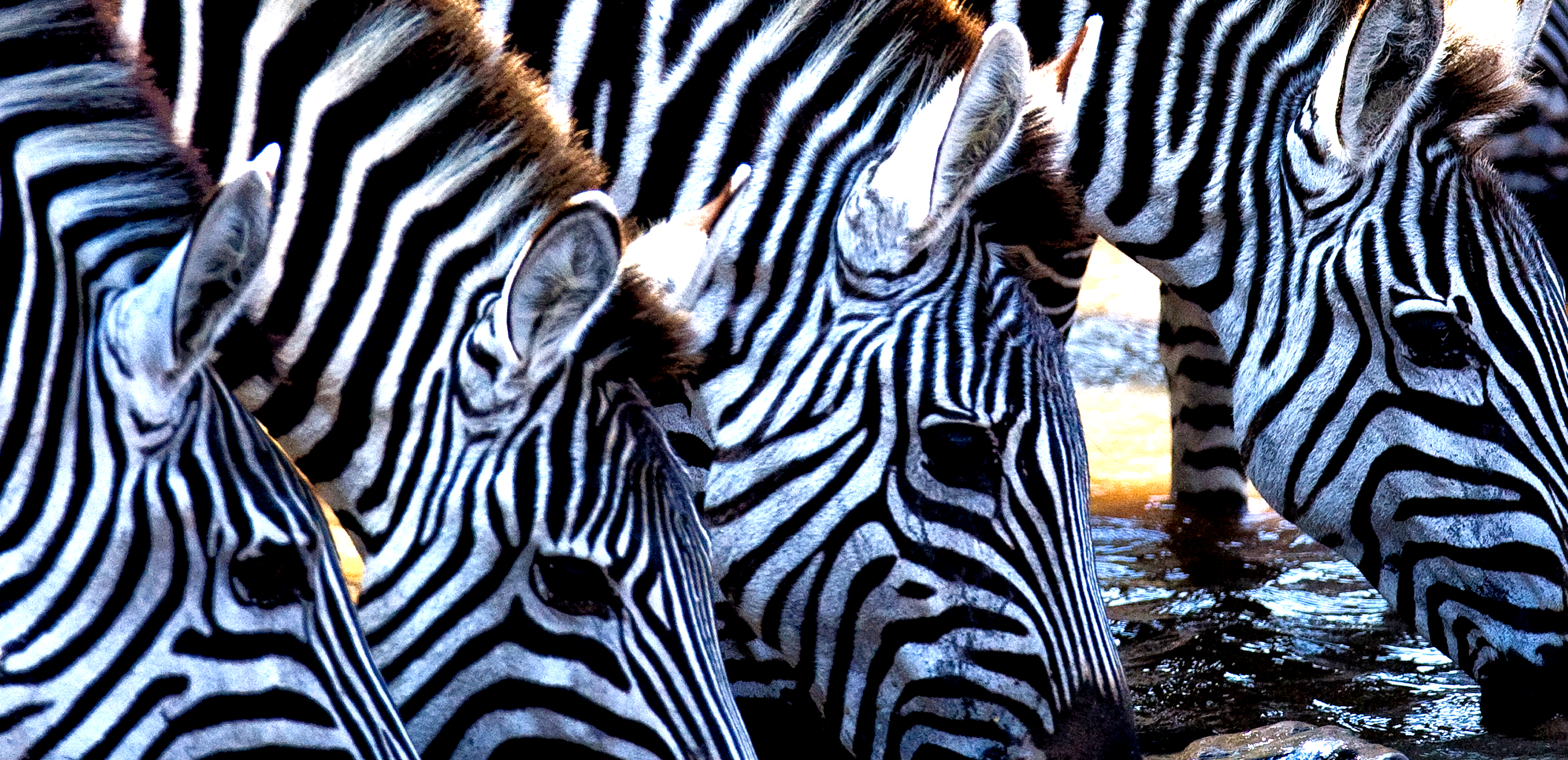 5-Zebra_close-up